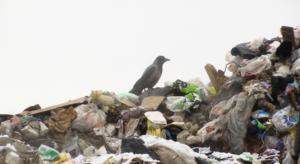 В Прикамье снижен тариф на вывоз мусора